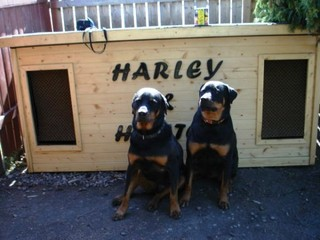 Hunter and Harley - Canada